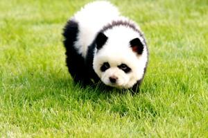 Pets Beauty In Zhengzhou