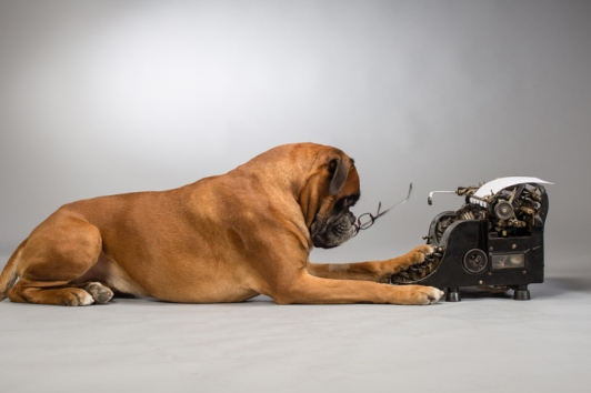 Boxer dog making note